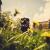 Tierportrait, Hundefotos, Portraits, Shooting, Tierfotografie, Rossi, Gießen, Giessen, Rossi Photography, stolenmoments, 4 Pfoten, Dein Fotograf aus Gießen