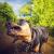 Tierportrait, Naturfotos, Hundefotos, Portraits, Shooting, Tierfotografie, Rossi, Gießen, Giessen, Rossi Photography, stolenmoments, 4 Pfoten, Dein Fotograf aus Gießen