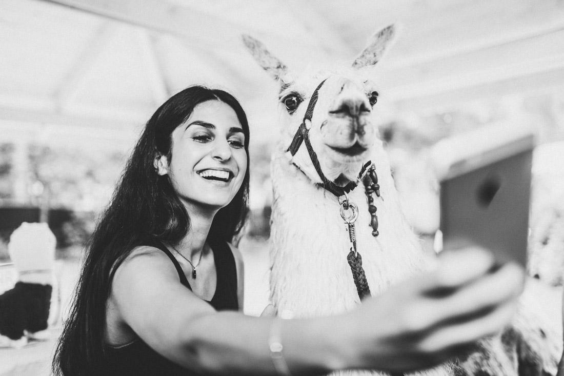 selfie eines hochzeitsgastes mit einem lama - hochzeitsfotograf dortmund und ruhrpott