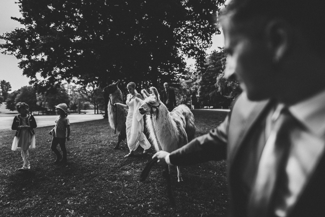 spazieren gehen mit lamas, hochzeitsfotograf dortmund und ruhrpott