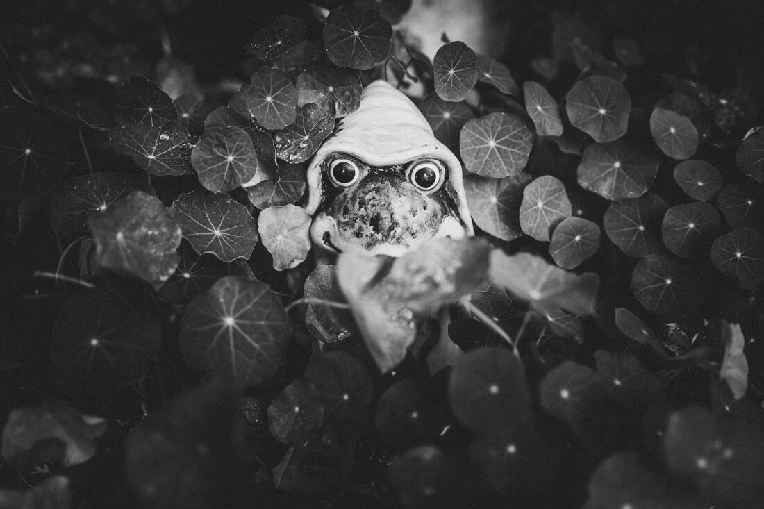 kleine froschfigur inmitten von efeu beim zuckerbergschloss - hochzeitsfotograf schwarzwald