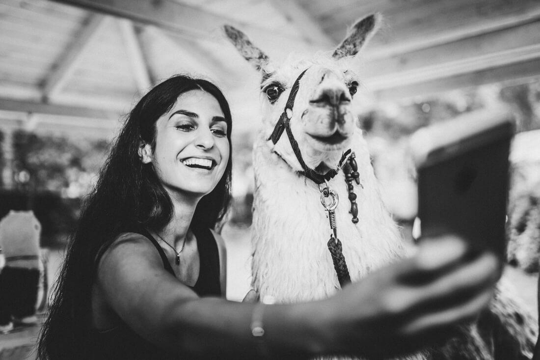 selfie mit lama auf einer hochzeit in wischlingen - hochzeitsfotograf dortmund und ruhrpott